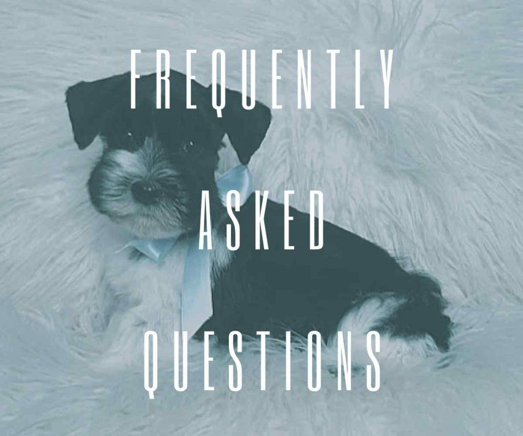 frequently-asked-questions-taras-schnauzers