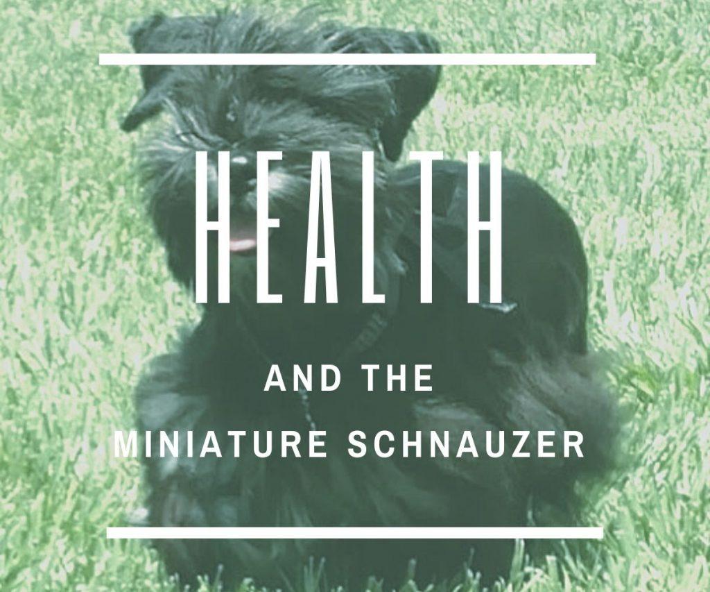 miniature-schnauzer-potential-health-problems